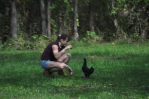 Vanessa feeding austrolorp hen